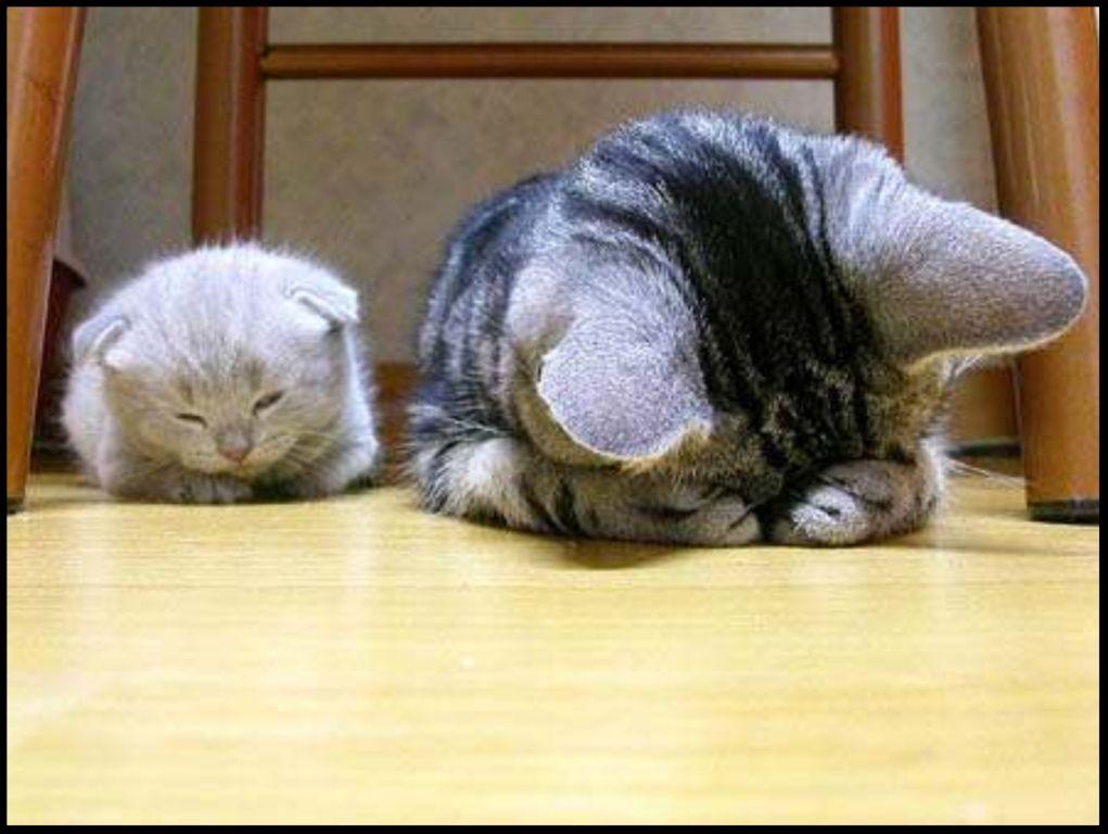 http://fan2dimages.centerblog.net/ Zg9jg2et
